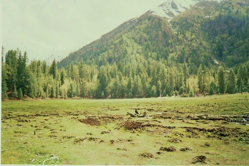 Small Fairy Meadows