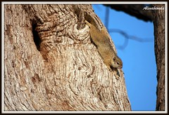 Squirrel (Alinabionda - Crazy Girl) Tags: canon southafrica sudafrica canon40d alessandramariani