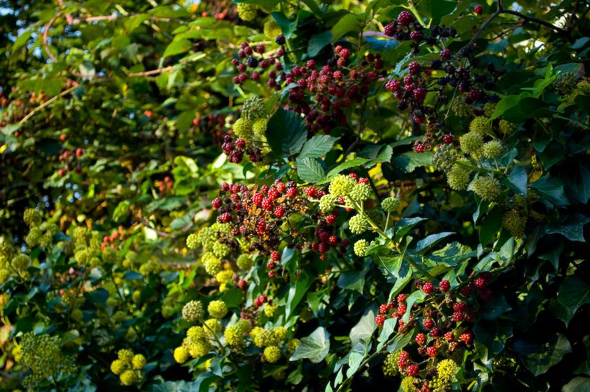 ?Berries?