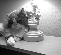 (SmartAnnie (Away)) Tags: blackandwhite bw cats cute rip paws catsrule scottishfoldcats