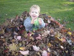 2008.10.19-Leaves.17.jpg