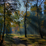 Wald im Herbst_hdr thumbnail