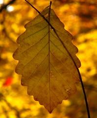 blazing autumn colours!