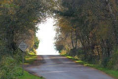 Passing place (foxypar4) Tags: road uk trees scotland lane sutherland dornoch embo passingplace mywinners anawesomeshot
