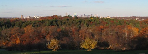 Arnold Arboretum: View from Peter Hill