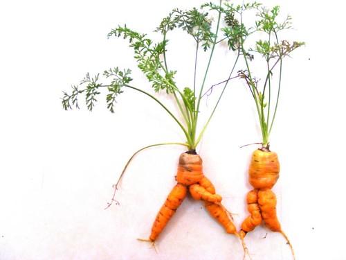 Sexy carrots....