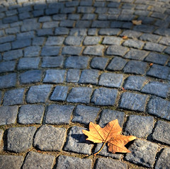 Autumnal Minimalism (NatashaP) Tags: autumn fall leaf nikon grandmother explore thumbsup stonepavement twothumbsup bigmomma d40 supershot interestingness15 challengeyouwinner mywinners abigfave anawesomeshot overtheexcellence theperfectphotographer pfogold friendlychallenges thumbsupwrestling thiswasthelowesticouldgetwithoutlyingonmybellyinthemiddleofthestreet verylowpov tuw113