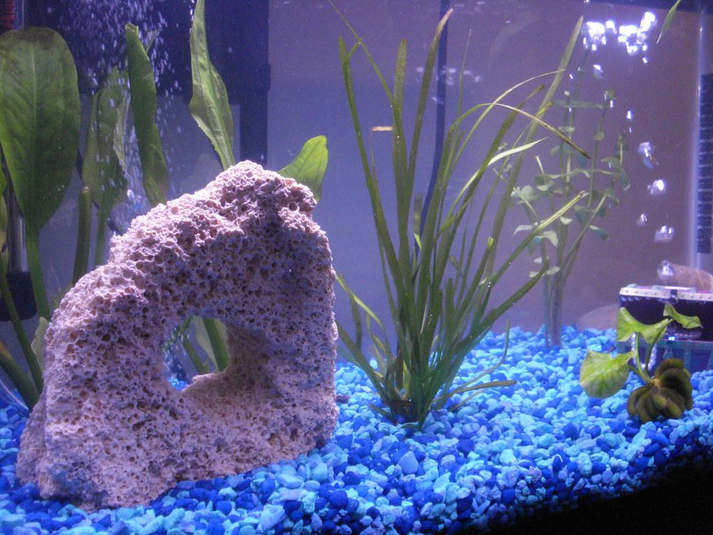 Aquarium Update