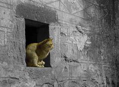 Gat (Albert Collado) Tags: cat gatos gato felino gat gats