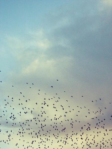 Mer fåglar