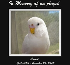 In loving memory of an Angel