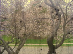 outside my window. (helen g.her) Tags: window curtain calmness
