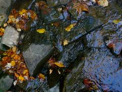 P1000105B (stephencjameson) Tags: fall atumn stephencjameson