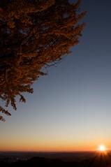 銀杏と朝陽