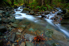 stream junction (Mike Hornblade) Tags: longexposure fall landscape washington stream cascades flowingwater mtbakernationalforest d700