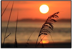 Sunset Bokeh ( dragonflyriri  (Limited Flickr Time)) Tags: sunset sea orange sun beach sc water golden warm december bokeh oats 2008 southbeach shilouette hhi hiltonheadisland img2475 cmwdorange goldstaraward