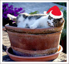 ~ ahhh...... the Yule-tide ~ (uteart) Tags: cute cat explore flowerpot visualart meimei christmashat mywinners abigfave utehagen uteart explore122108