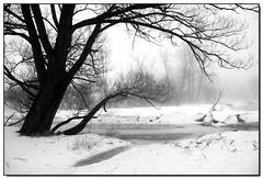 Fog (Lisa-S) Tags: winter blackandwhite bw white snow ontario canada tree fog canon landscape lisas explore soe allrightsreserved brampton 50d canon50d theunforgettablepictures thesecretlifeoftrees spiritofphotography hawaalrayyanfav magicdonkeysbest vosplusbellesphotos copyrightlisastokes gicno