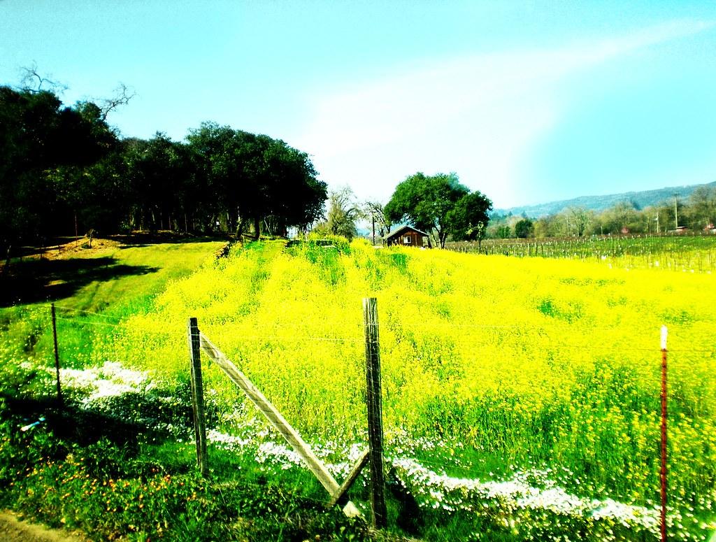 spring in sonoma county.