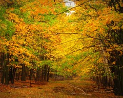 Another Look at Autumn (Sandra Leidholdt) Tags: autumn trees usa nature leaves wisconsin america automne landscape us woods midwest unitedstates hiking fallcolors autumncolors trail arbres american paysage autunno autumnal amricain midwestern ribmountain autunnale sandraleidholdt leidholdt sandyleidholdt