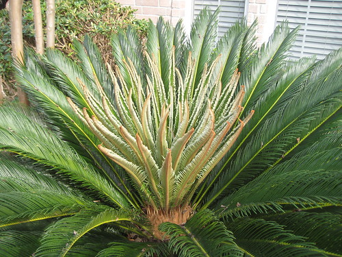 new_fronds_2
