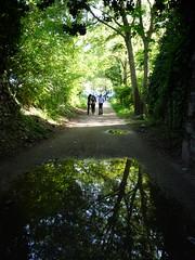 lo specchio (luana183) Tags: verde alberi acqua riflesso borghetto mincio pozzanghera