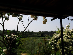 Lanuvio (Birnardo) Tags: verde italia campagna lazio bestofflickr portico lanuvio simplysuperb flickrpointofview landscapesdreams salveanatureza overtheshot birnardo bomboetosky