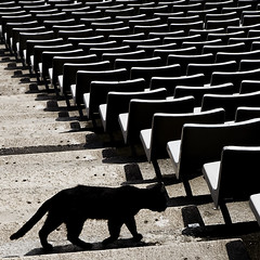 Solitario (davic) Tags: barcelona david cat stadium bcn explore gato estadio seats getty lonely vendo montjuic gettyimages asientos olimpic cornejo davic olimpico olimpyc views100 estadi solotario davidcornejo albumextrafilm