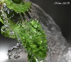 Fresh moment (explore ) (Nouf Alkhamees) Tags: light color green water colors digital canon flickr drop fresh loveit sos kuwait moment nono q8 alkuwait        nouf   400d   alwayscomment5 alkhamees noufalkhamees