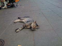 タバコを枕に寝そべるネコ