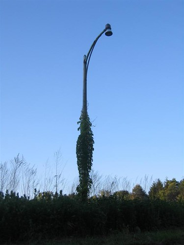 Old lamppost wrapped in vines