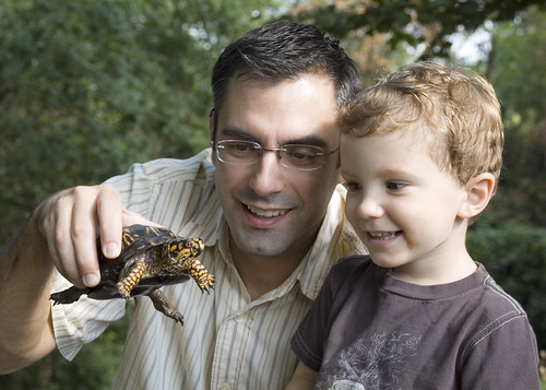 dom, dad, and turtle