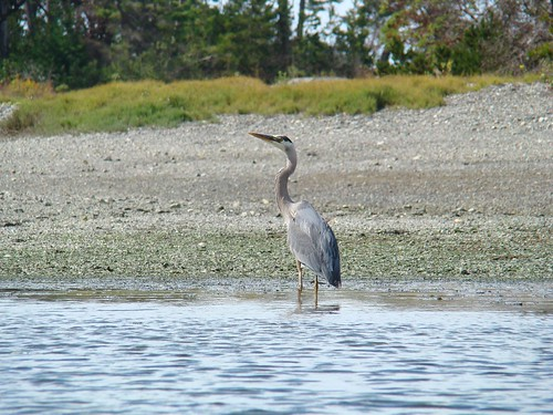 2008-08-10 Chatham Island 505