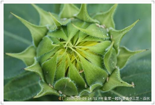 20080809三芝淡水全家遊 (1)