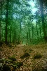 La Fageda d'en Jord (2).- (ancama_99(toni)) Tags: old trip travel light vacation sky espaa paisajes naturaleza holiday abstract color verde green texture nature forest photoshop vintage garden landscape geotagged photography photo interestingness interesting spain nikon espanha europe photos antique paisaje photographic catalonia girona explore textures bosque layers catalunya 1855mm nikkor paysage 2008 abstracto espagne paesaggi soe texturas catalua gerona orton italians paisagens pasoscatalans verd 1000views garrotxa fageda olot d60 catalogne fagedadenjord texturized nikkor1855 nikond60 25favs landschaftsaufnahmen 25faves mywinners aplusphoto holidaysvacanzeurlaub colourartaward interesantsimo