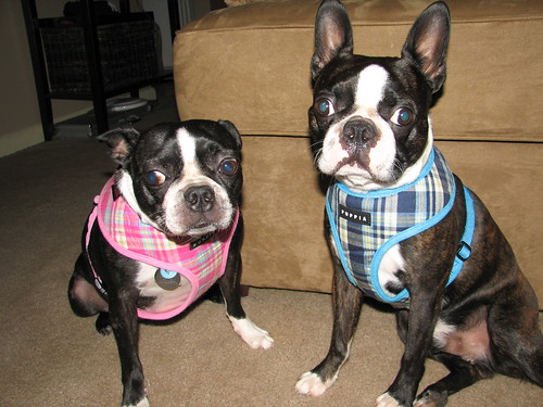 matching harnesses