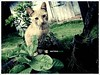 gatoassustado.com (Matteus Oberst) Tags:
