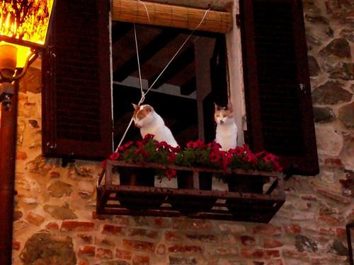 gatti a montm3
