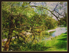 The Humble River Tree (Tim Noonan) Tags: autumn tree art water leaves digital photoshop river landscape effects artistic branches manipulation mosca humber treatment artcafe sobeautiful blueribbonwinner mywinners abigfave platinumphoto teagans citrit theunforgettablepictures newacademy overtheexcellence betterthangood proudshopper goldstaraward inspiredbyhim maxfudge awardtree magicdonkeysbest amongstthethorns globalworldawards creattivit maxfudgeexcellence goldenmasterpiece artcafedomidoexhibitionscomein maxfudgeawardandexcellencegroup daarklands dlstorybook