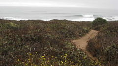 Beautiful Waves in Pescadero IMG_1320.JPG Photo