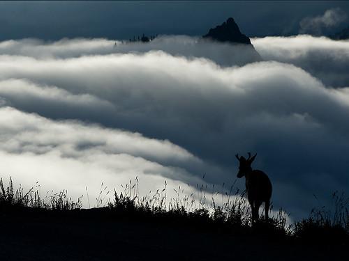Foggy sunrise at Hurricane Ridge -Olympic National Park