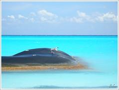 Mais azul . And some more blue (selenis) Tags: blue sea seagulls praia beach azul méxico mar nikon gaivotas playadelcarmen 2008 turquesa theperfectphotographer goldstaraward p5100 flickrclassique