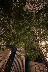 Ya es Navidad... (quijano M) Tags: ny newyork luz night luces noche manhattan rockefellercenter nuevayork