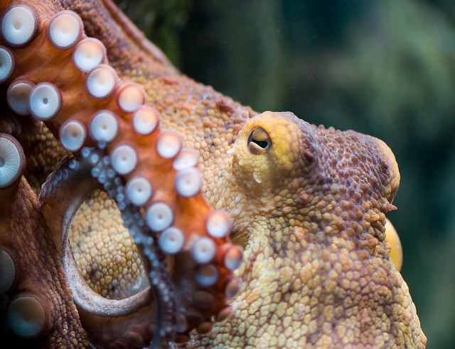 In the Eye of the Octopus