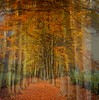 Double exposure (best viewed large) (Need A Haircut) Tags: autumn trees wales exposure double picasacollage dinaspowys instantfav mywinners cwmgeorge