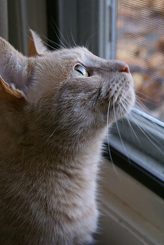 jeter watching the leaves