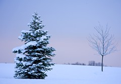 A Pair (Matt Champlin) Tags: morning trees winter shadow white snow tree field sunrise alone purple snowy country evergreens christmastrees fingerlakes skaneateles countrylandscapes