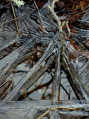 geometric Ice, islesboro, maine (niccoluv) Tags: macro ice geometry maine islesboro