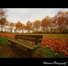 ~Lonely Bench~ (Adettara Photography) Tags: park trip autumn trees fab nature leaves bench deutschland wiesbaden searchthebest angle perspective wideangle soe 1022mm schierstein blueribbonwinner supershot golddragon abigfave canoneosdigitalrebelxti worldbest platinumphoto anawesomeshot fineartwork impressedbeauty aplusphoto ultimateshot diamondclassphotographer flickrdiamond ysplix theunforgettablepictures overtheexcellence betterthangood theperfectphotographer goldstaraward adettara multimegashot magicdonkeysbest vosplusbellesphotos ~lonelybench~ thenewselectbest flickrenvythebesttm