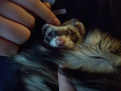 Hypnotic head rubs